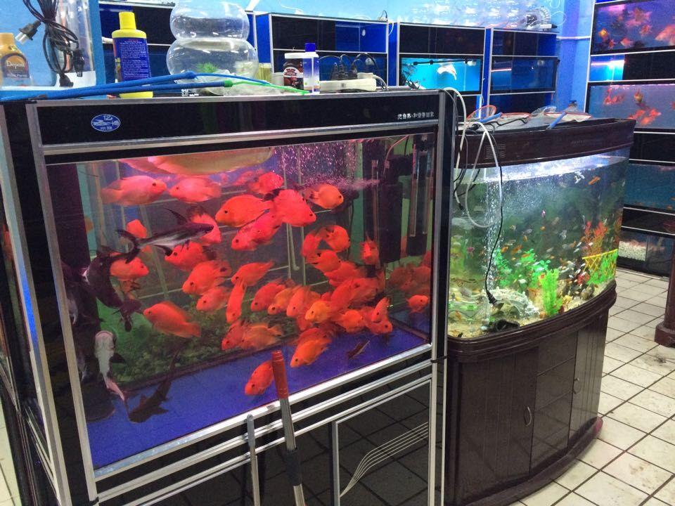 亞克力生態魚缸